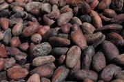 Codex Alimentarius adopta nuevos estándares para proteger la salud de los consumidores