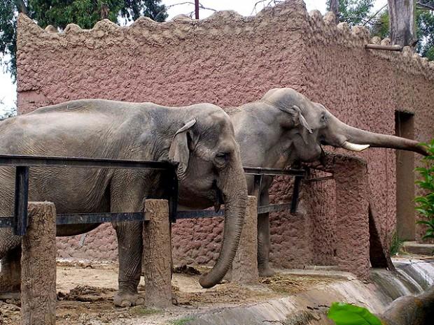 El Zoo de Morelia ofrece promociones - Ahuizote