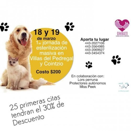 Primera Jornada de Esterilización Masiva para perros y gatos en Morelia
