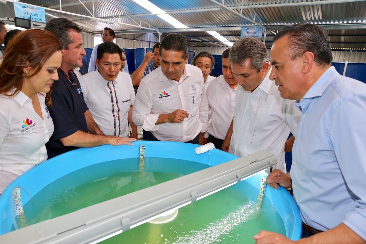 Inaugura Gobernador primer laboratorio de producción de pez blanco en Michoacán