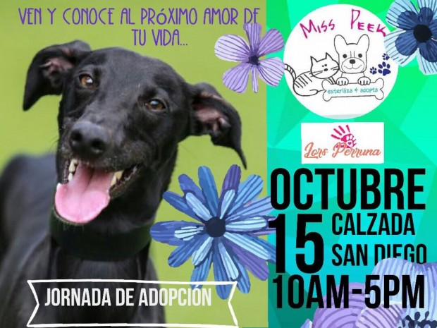Este domingo, feria de adopción canina en la Calzada de Fray Antonio de San Miguel