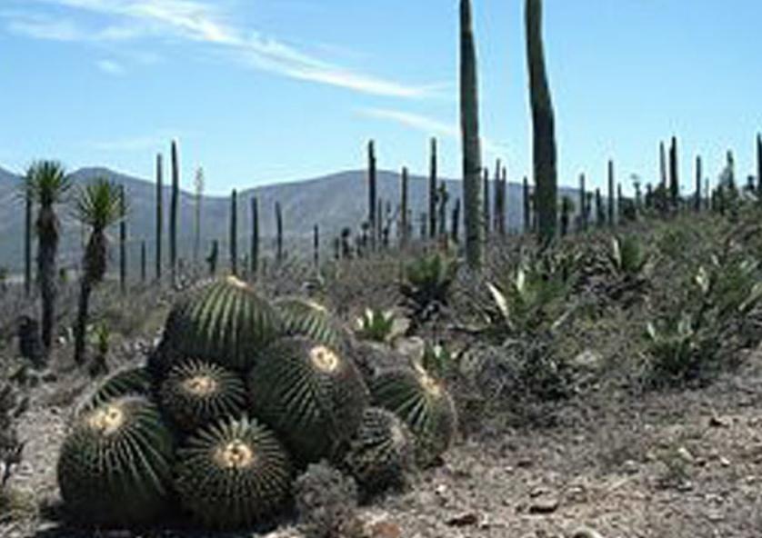 Unesco otorga a México un nuevo patrimonio de la humanidad: El Valle de Tehuacán-Cuicatlán, entre Oaxaca y Puebla
