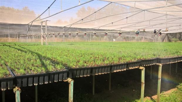 Vive Michoacán una Navidad sustentable: Cofom