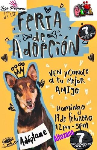 Este domingo, Feria de Adopción Canina y Felina…. En el  mes del amor, dale amor a un amigo
