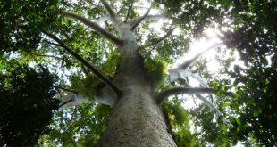 Los bosques juegan un rol fundamental en las políticas de lucha contra el cambio climático