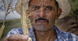 Los agricultores del Corredor Seco de Centroamérica han sufrido efectos devastadores