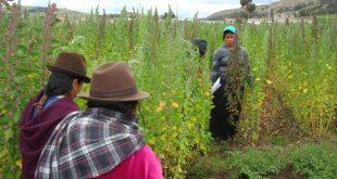 Un grupo de agricultures cultivan quinoa en la región de los Andes, en América Latina.