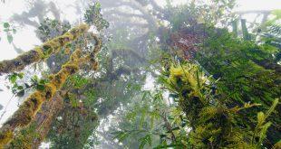 Los increíbles bosques de nube en Papúa Nueva Guinea.