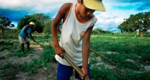 Un joven trabajando en una zona rural del noreste de Brasil.